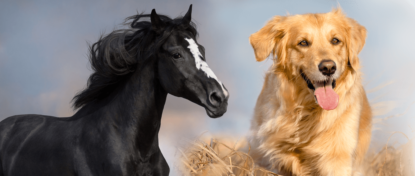 Featured image of horse and dog